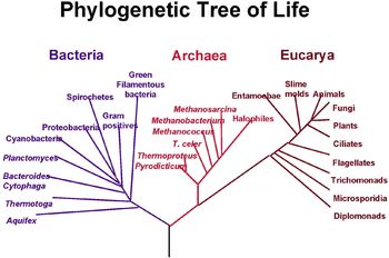 PhylogeneticTree