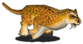 Cheetah2.png