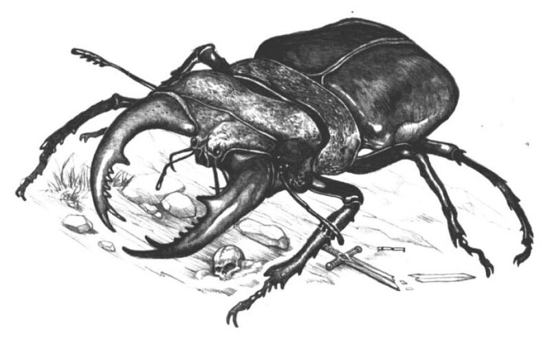 File:Carrionbeetle.JPG