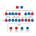 Autosomal Dominant Pedigree Chart.svg