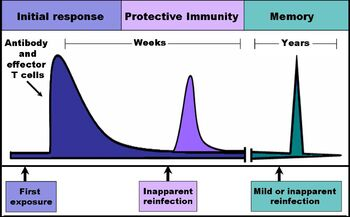 Immune response