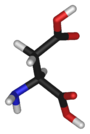 L-aspartic-acid-3D-sticks