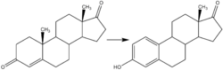 Reaction-Androstendione-Estrone