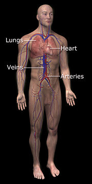 3DScience cardiovascular system