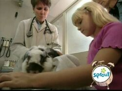 3787.Veterinarian