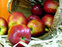 Irishapples