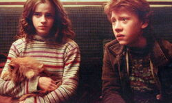 Hermione ron crookshanks