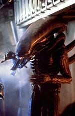 Alien (1979) - The Alien