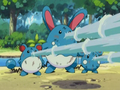 EP278 Azurill, Marill y Azumarill usando Pistola agua.png