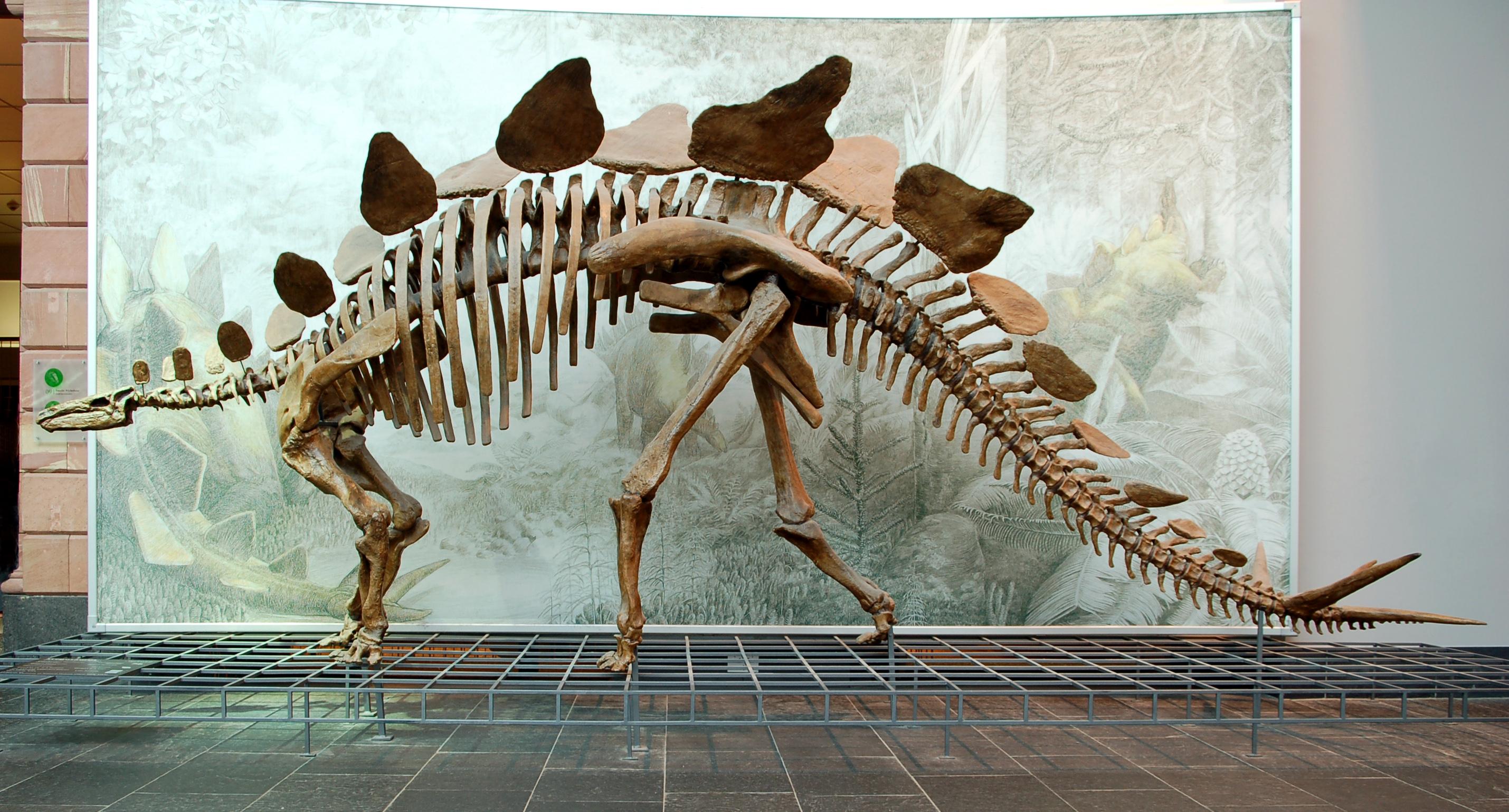 What did dinosaurs look like - Einsteins Top Secret Science