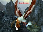 Steelfeather Nest