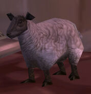 Elwynn Lamb