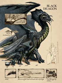 Black dragon anatomy - Lars Grant-West