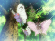 EP568 Butterfree y Venomoth