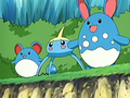 EP429 Azumarill, Surskit y Marill.png