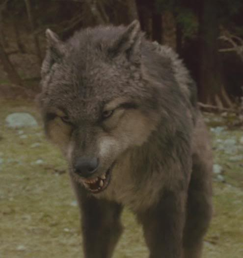 File paul wolf twilight