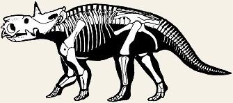 pachyrhinosaurus skeleton  Pachyrhinosaurus_skeleton.jpg