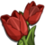 Red Tulip-icon