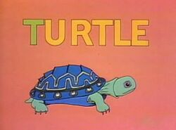 Turtle.Hale