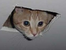 Ceilingcat