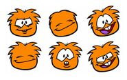Orange Puffle Pics