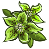 Green Hellebores-icon