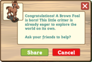 Brown foal help
