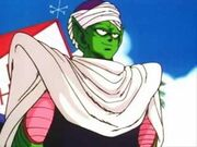 Piccolo25