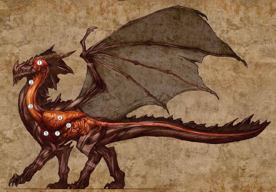 Dragon_Organs.png