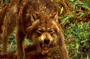 New-moon-wolf-pack-1