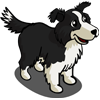 Border Collie-icon