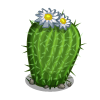 Barrel Cactus-icon