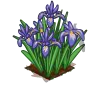 Perfect Iris-icon