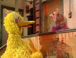 Piggy-bigbird