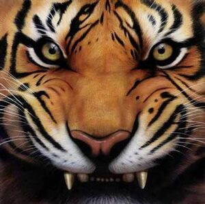 Tiger Growl