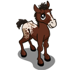 Appaloosa Foal-icon