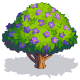 Jacaranda-icon.png
