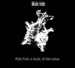 Animals Mule Hide