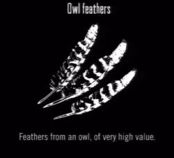 Animals Owl Feathers
