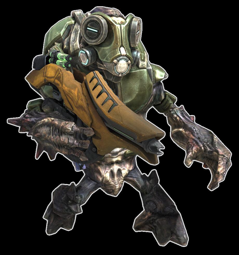 Unggoy - Halo Nation — The Halo encyclopedia