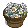 Edelweiss Bushel-icon