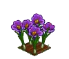 Perfect Saffron-icon