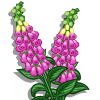 Foxglove-icon