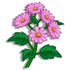 Pink Aster-icon