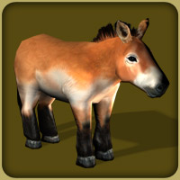 zoo tycoon 2 wild horses download