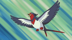 Ash Swellow