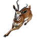 Item pronghornantelope 01
