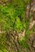 Mossy Trunk Habitat.png