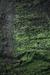 Mossy Habitat.png