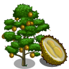 Chanee Durian Tree-icon